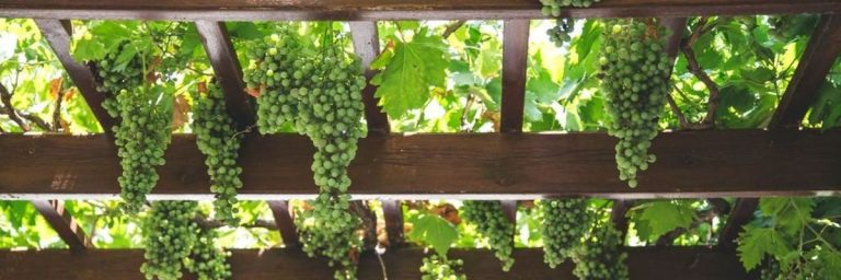 Swan Valley Wineries, WA