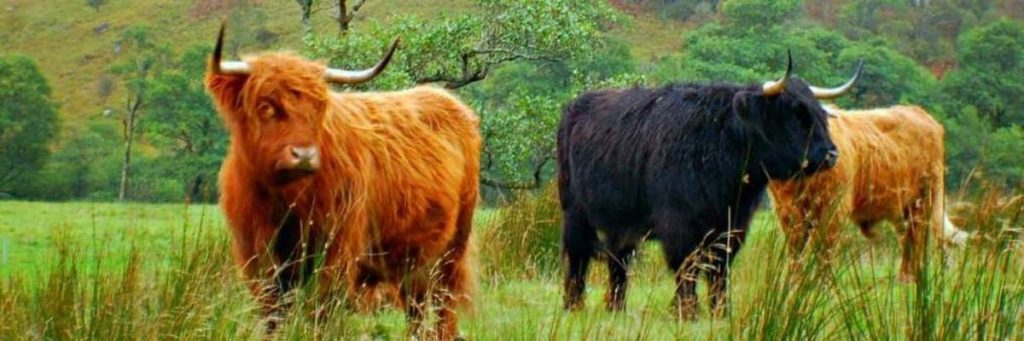 Things to do on a Scottish Road Trip