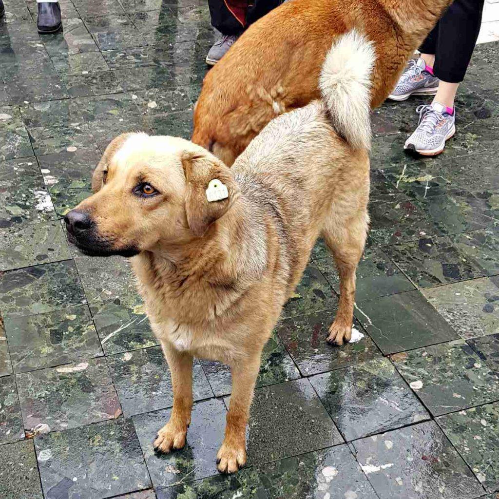 Skopje walking tour and dog pack