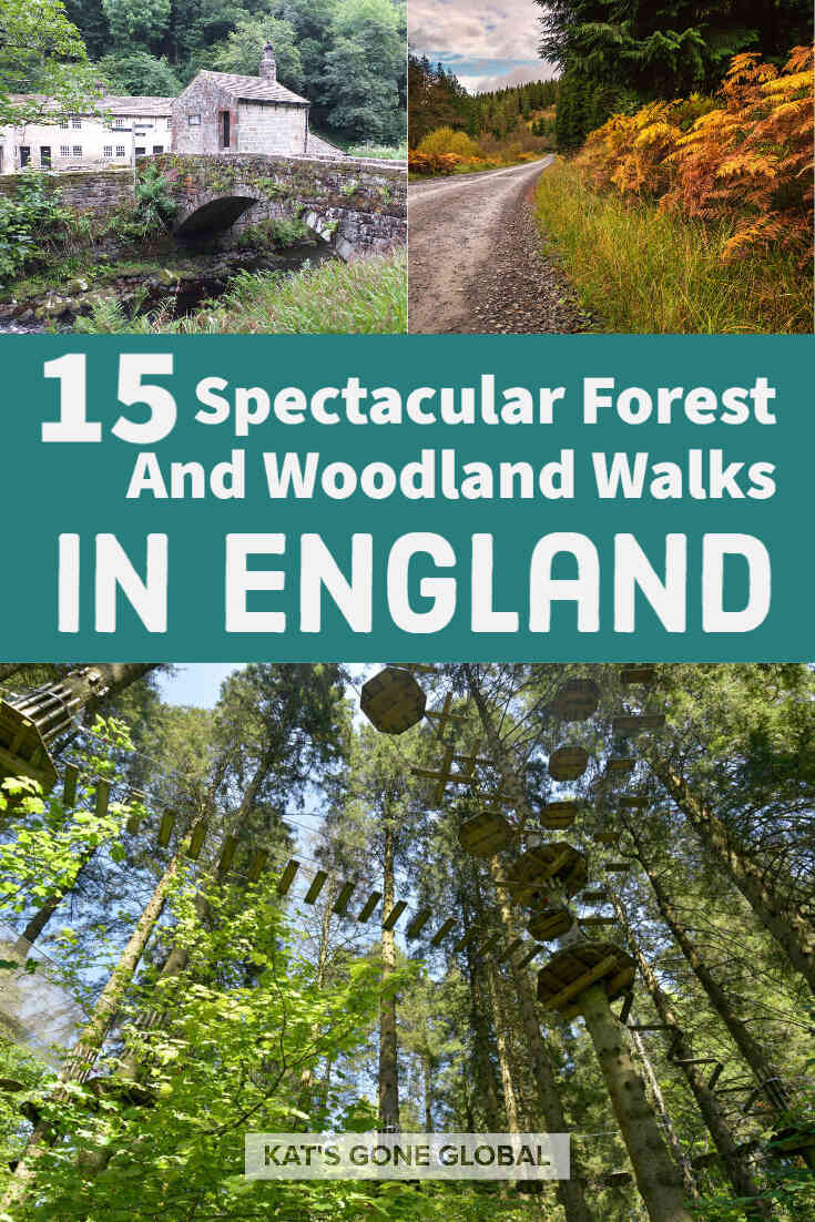 Forest And Woodland Walks In England