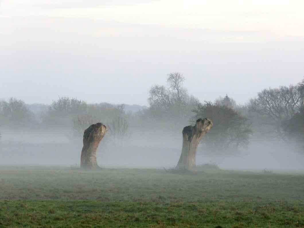 Hatfield Forest, Essex
