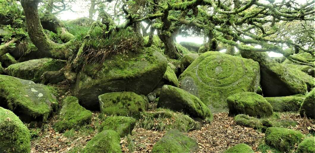 The druids stone Woodland mossy in Wistmans wood in Devon.