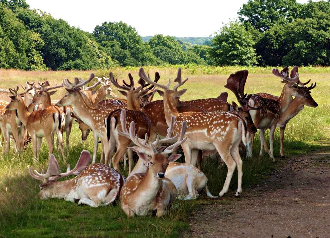 Deer in Richmond Park London