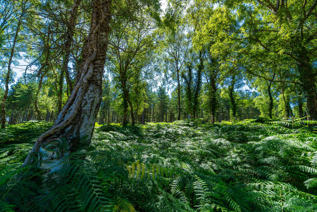 New Forest National Park in the Summer