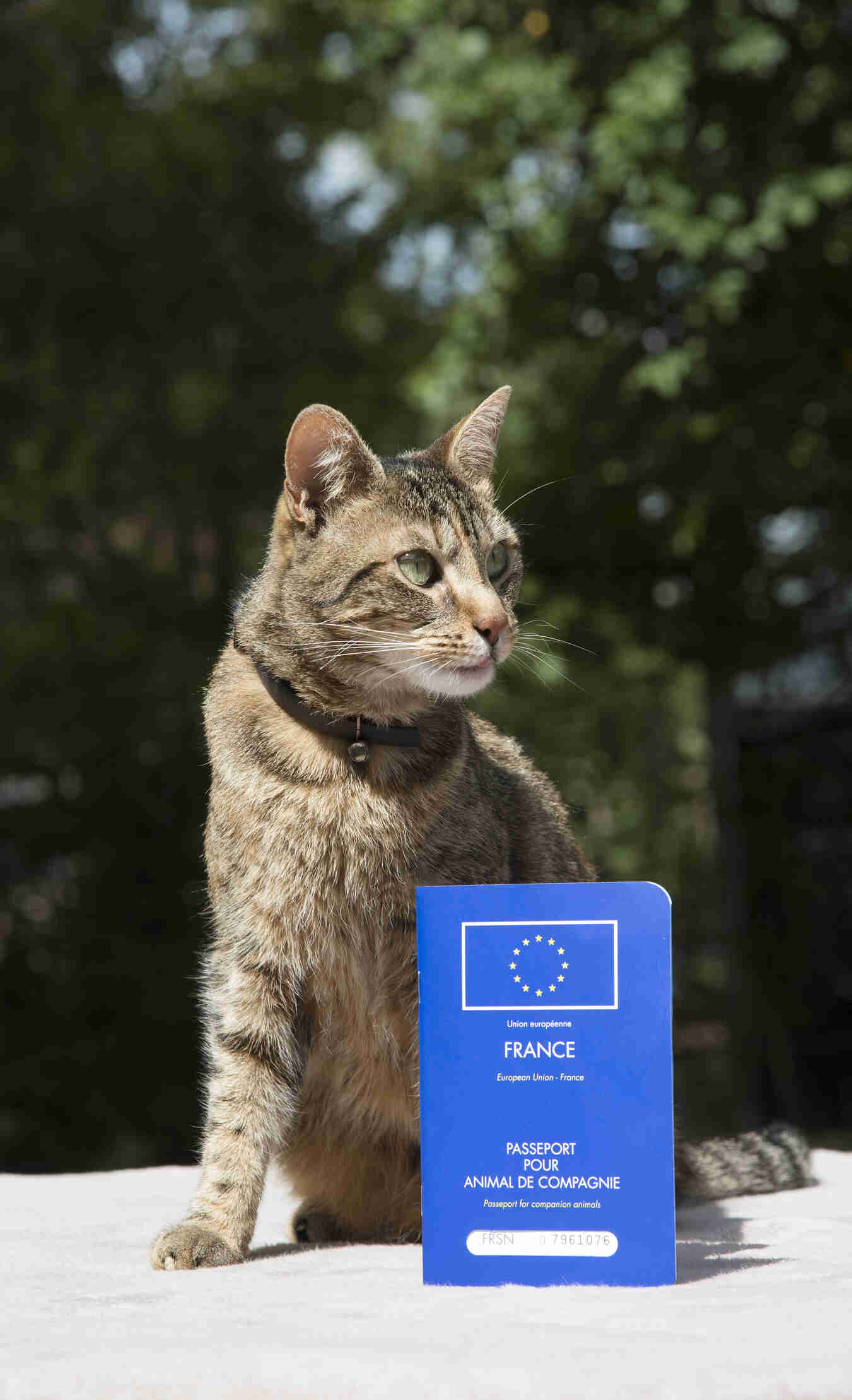 Cat-with-a-french-pet-passport
