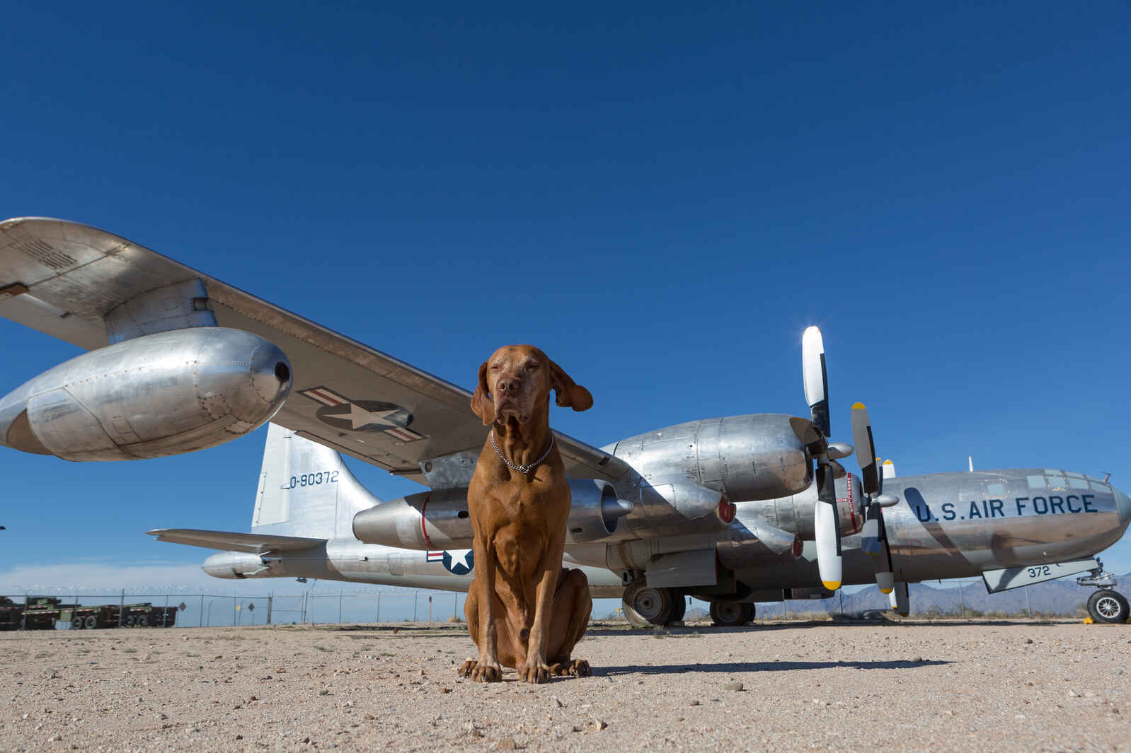 Dog-in-front-of-a-plane-1
