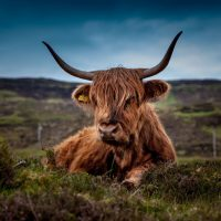Things to Know Before Travelling to Scotland